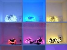 Đèn LED dây 5m 50 bóng tròn