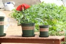 Chậu trồng cây MONROVIA TBNN012